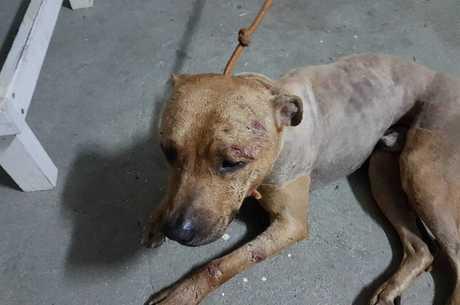 Cães estavam muito machucados e foram para ONG