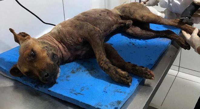 Animais eram medicados para continuar na luta às vezes até a morte
