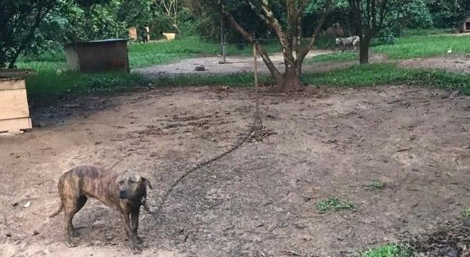 Animais foram resgatados após denúncia anônima
