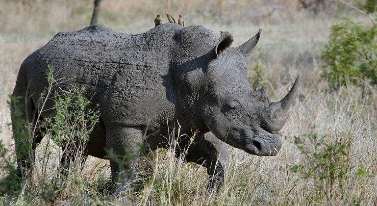 Plano bizarro tentará salvar animais da caça ilegal