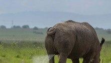 Sem reação! Garça infeliz leva jato potente de urina de rinoceronte