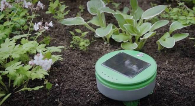 Robô jardineiro cuida da plantação removendo as ervas daninhas