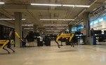 Além de tudo isso, o Spot mostrou que pode também se divertir com outros robôs parecidos. No vídeo, ele aparece pulando cordas com outros dois dispositivos da Boston