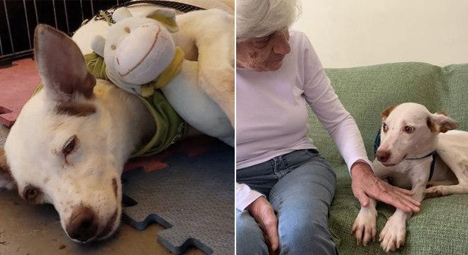 Romeu abraçado ao brinquedo no evento de adoção; O animal já no novo lar