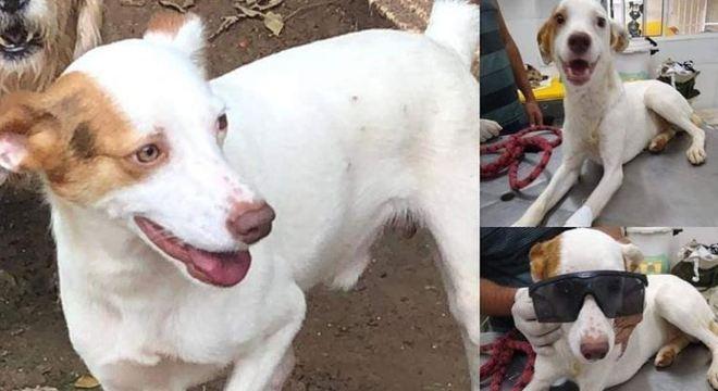 O animal foi resgatado, ainda machucado, em uma Estrada de São Paulo
