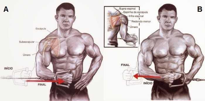 Exercicios de ombro