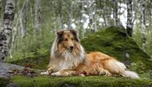 Estudo revela quais são as raças de cães mais agressivas