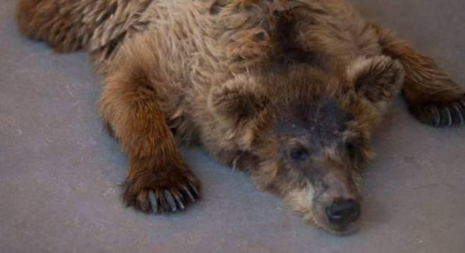 Rowena viveu durante 10 meses em um santuário de animais