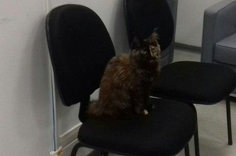 Um dos gatos estava em caixa para transporte de animais