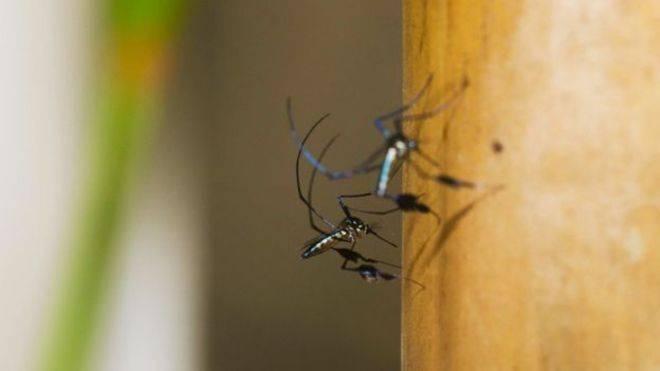 OSabethes, junto aoHaemagogus, é o principal transmissor da febre amarela atualmente no Brasil. É um mosquito silvestre, que vive em região de mata e costuma ficar na copa das árvores - por essa razão, pica preferencialmente macacos. Coloca seus ovos no oco das árvores. É diurno, picando do meio-dia até o pôr do sol. Chama a atenção pelo colorido metalizado, com tons de violeta, roxo, azul e verde