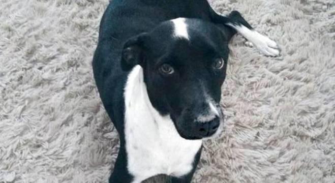 A cachorra foi resgatada com vida após ficar quase um mês em penhasco