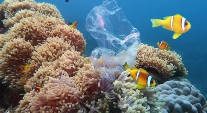Pesquisas estimam que de 5 a 12 milhões de toneladas métricas de resíduos plásticos chegam ao mar a cada ano