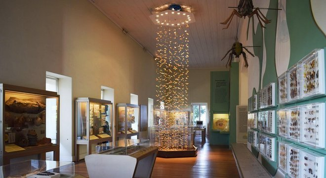 Andar onde ficavam insetos e outros animais invertebrados no Museu desabou