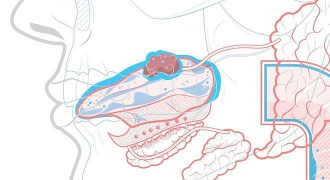 Saliva, o que é? Definição, glândulas salivares, funções e curiosidades
