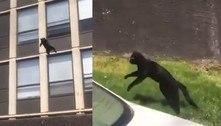 Gato dá salto perfeito de 5º andar de prédio em chamas e sai ileso
