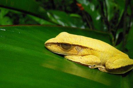 Espécies nos trópicos podem ser perdidas em breve por causa da atividade humana e do aquecimento global