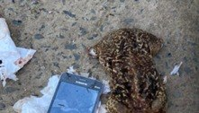 Policiais penais encontram celular dentro de sapo em presídio de MG