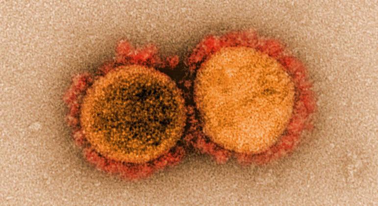 Variante Épsilon é classificada como preocupante por agências sanitárias