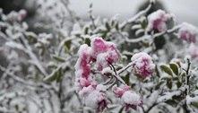 Semana deve ter frio intenso e pode nevar no Sul do país