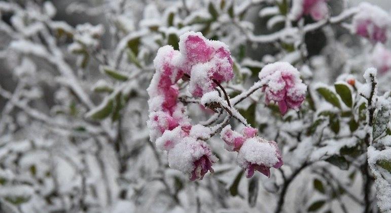 Pode nevar na região Sul do país nesta semana