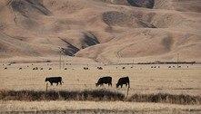 EUA: seca na Califórnia ameaça abastecimento de alimentos