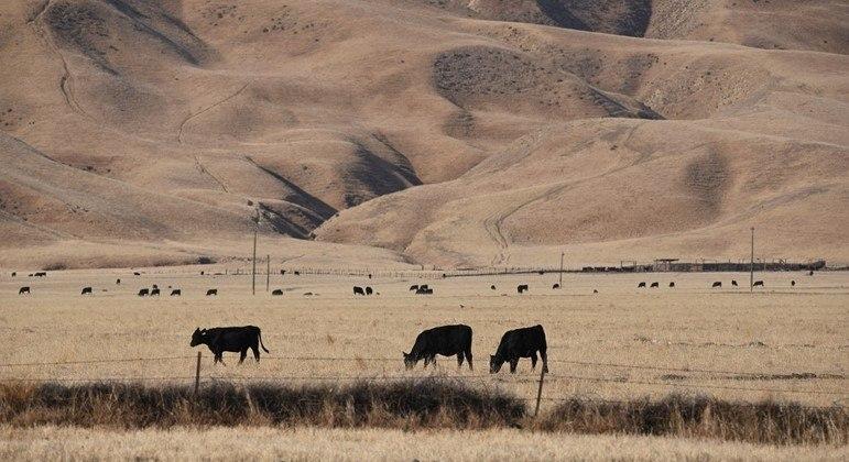 Árvores mortas e plantas murchas deixam agricultores preocupados na Califórnia
