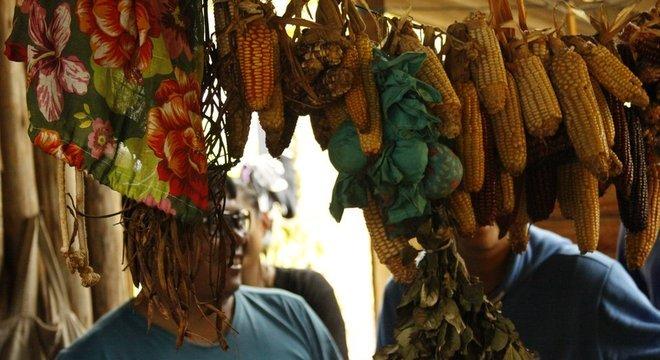 Secagem do milho no pós-colheita em aldeia guarani