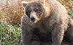 Inicialmente era a Terça-feira do Urso Gordo, um dia em que os funcionários do parque imprimiram fotos de alguns dos mais de 2.000 residentes do parque