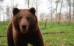 E, apesar de não estar claro porque ursos gordos exercem tanto fascínio sobre as pessoas, uma coisa é certa