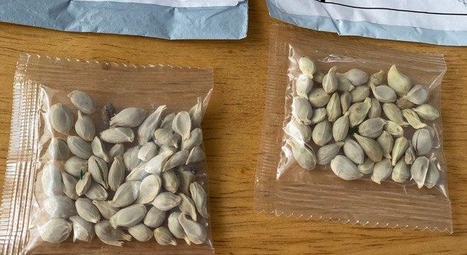 Pacotes com sementes não-identificadas têm sido enviados pelo correio nos EUA