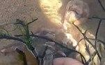 Um jovem tiktoker compartilhou uma filmagem na qual sugere ter encontrado o esqueleto de uma sereia