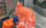 Roman pesca principalmente nas águas geladas do Mar de Barents, no norte do país