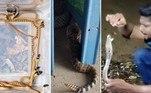 Especialistas encontram 19 serpentes super venenosas em casa de família.Cascavel invasora é surpreendida e devorada por serpente 'vigilante'.Homem captura serpente venenosa, se exibe com o bicho e vai à óbito.A seguir, os conteúdos sobre serpentes mais lidos doHORA 7em 2020!