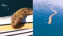 Serpente marinha tenta subir em prancha após fracasso sexual