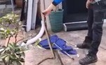 O apanhador teve dificuldades para capturar a serpente. No entanto, ao final, deu tudo certo