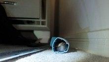 Serpente venenosa é encontrada dentro de bombinha para asma