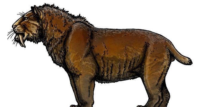 Smilodon populator, um felino maior do que leões e tigres modernos, chegava a pesar 400 kg
