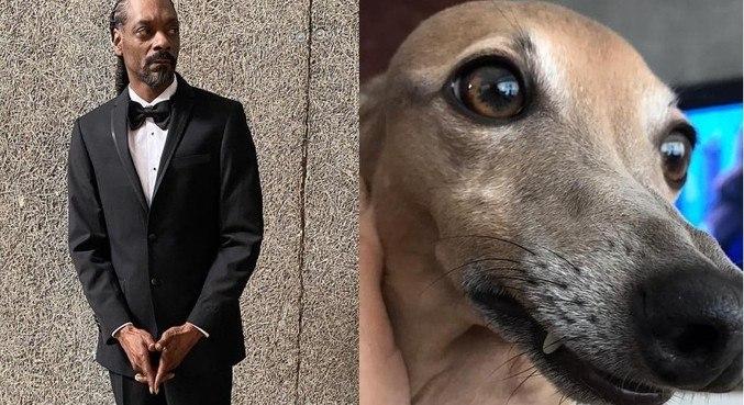 Anitta comparou Snoop Dogg ao seu cachorro, Plínio