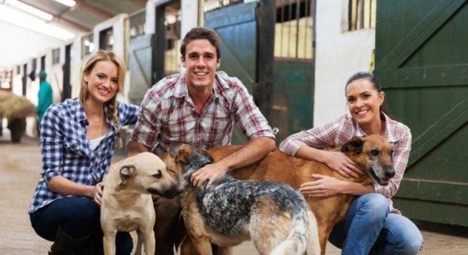 socializar cães