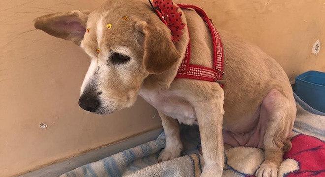 Cachorra foi encontrada na zona leste de São Paulo