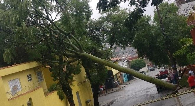 Árvore ficou atravessada na rua e impediu o tráfego de veículos