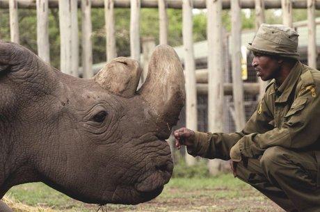 Último rinoceronte-branco do norte morreu este ano