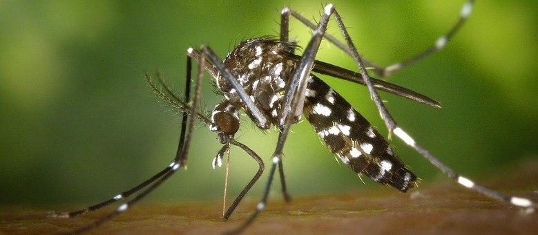 Chikungunya pode trazer complicações no longo prazo