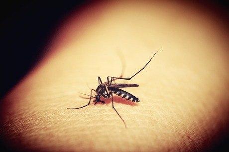 Este é o segundo ano com mais mortes por dengue