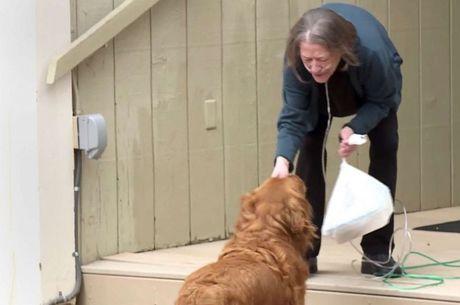 Sunny, o cachorro que entrega comida nos EUA