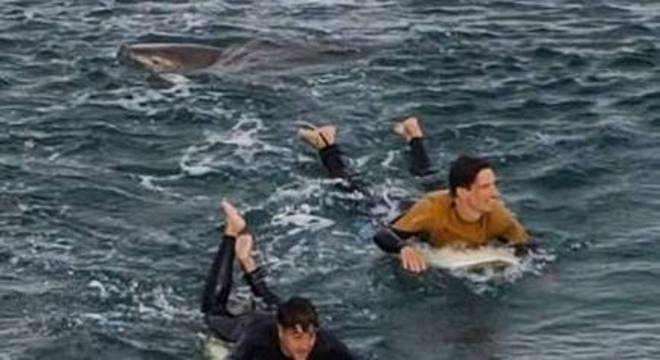 Tubarão deu um grande susto em surfistas de Bells Beach, na Austrália