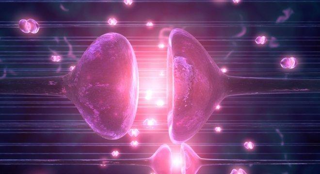 Pesquisadores identificaram sinapses após aplicarem método para reativar os cérebros