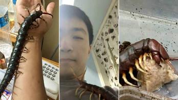 Taiwanês cria centopeia venenosa gigante como pet: 'Muito gentil' (Reprodução/YouTube/WWE)