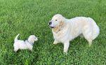 Quando o filhote chegou, a conexão entre os dois foi instantânea e eles se tornaram inseparáveis