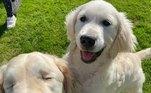 No Instagram, os humanos publicam fotos para lá de fofas dos cachorros e derretem o coração dos internautas — tanto que, só na rede social, eles já somam quase 30 mil seguidores. Como não se apaixonar por essa dupla?